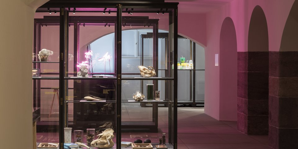 Zoological specimens from Humboldt-University's teaching collection. Exhibition view from Disappearing Legacies: The World as Forest at Tieranatomisches Theater of Humboldt-University Berlin. (Foto: Michael Pfisterer)