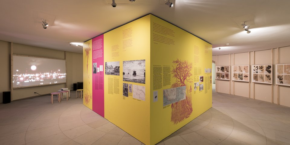 Downstairs gallery with Wallace cube. Exhibition view from Disappearing Legacies: The World as Forest at Tieranatomisches Theater of Humboldt-University Berlin. (Foto: Michael Pfisterer)